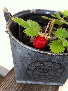 Wstrawberry